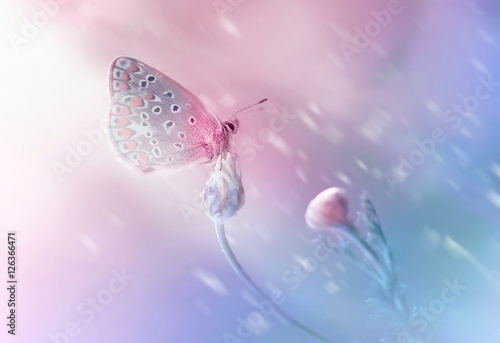 Beautiful delicate elegant butterfly on a flower with a soft focus on the blurry blue and pink background in the rays of light. Dreamy romantic artistic image spring or summer..