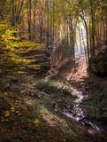 autumn landscape with vivid forest foliage