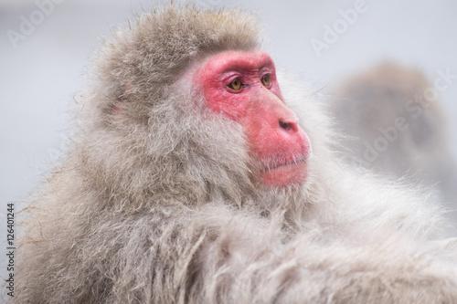 Plagát, Obraz Monkeys bathe in hot springs in Nagano, Japan