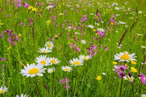Blumenwiese und Frühlingswiese Poster