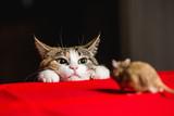 Kot w zasadzce na polowaniu na myszy
