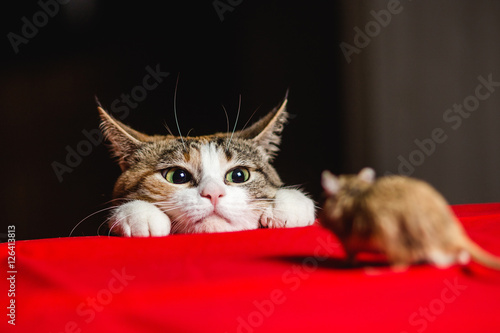 Poster Cat in an ambush on a mouse hunt