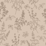 Fototapety Herb flower graphic sketch beige brown seamless pattern illustration vector