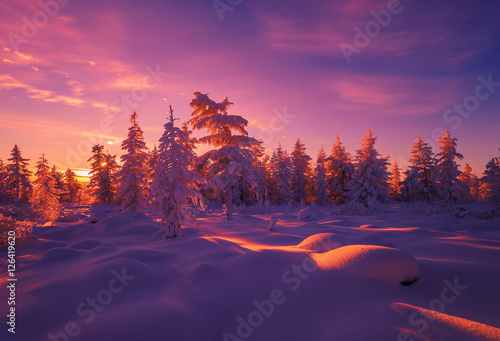 Fotobehang Aubergine Winter landscape with forest, sun and snow.