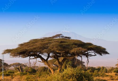 Valokuva Amazin african sunrise with acacia tree