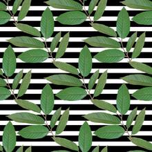 branche réaliste avec des feuilles tropicales. Vector illustration EPS