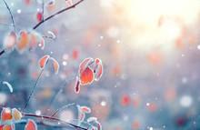 La naturaleza de fondo de invierno. Ramificación congelada con hojas de cerca