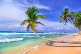 Tropical holidays in Sri lanka. Beautiful wild palm beach