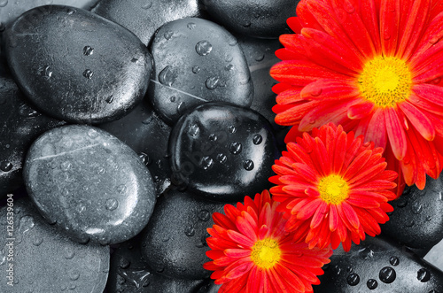 Poster flower on black pebbles in water drops as background