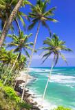 Beautiful wild tropical beaches of Sri Lanka