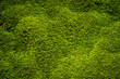 Green moss in nature