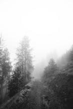 Footpath Forêt couvert par le brouillard