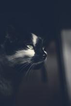 Portrait d'un chat noir regardant loin dans une pièce sombre
