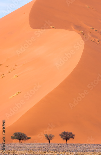 Poster Düne der Namib in der Mittagshitze, Namibia