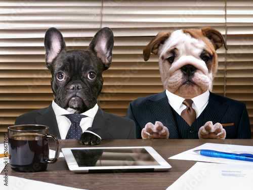 Business dogs in suits at work behind the office table Poster