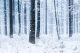 Fototapety Winterlandschaft im Wald mit Schnee