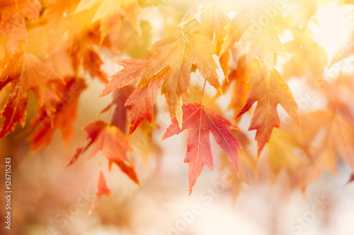 Keuken foto achterwand Herfst Autumn Thanksgiving Leaves Background
