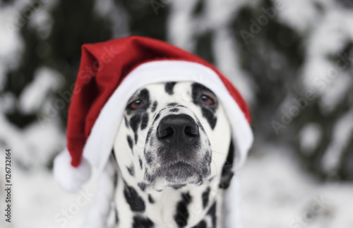 Poszter Dog in a hat of Santa Claus in the forest