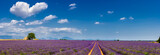 Fototapety Summer in Valensole with lavender fields, stone house and heart-shaped cloud (panoramic view). Summer in Alpes de Hautes Provence, Southern French Alps, France