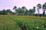 Fields Northern China