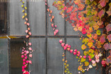 Colorful autumn leaves against dark grungy industrial windows