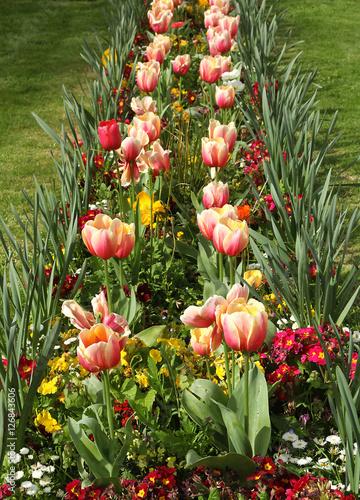 Massif de tulipes Poster