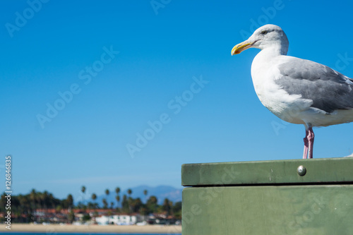 Poster seagull standing on a metal box in Santa Barbara shore