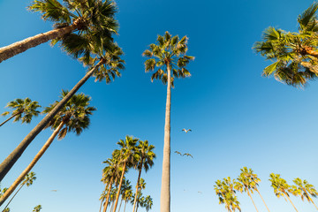 palm trees and seagulls in Venice beach