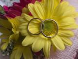 Par de alianzas sobre flor amarilla