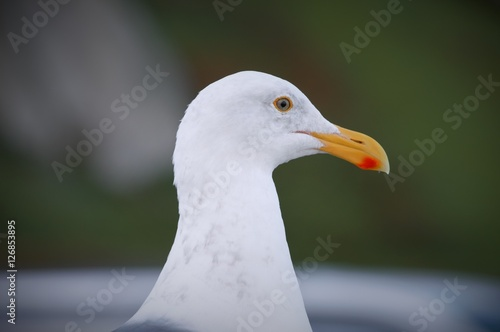 Poster seagull
