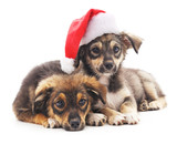 Dogs in Christmas hat.