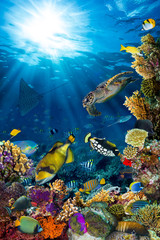 underwater sea life coral reef vertical high format with many fishes and marine animals