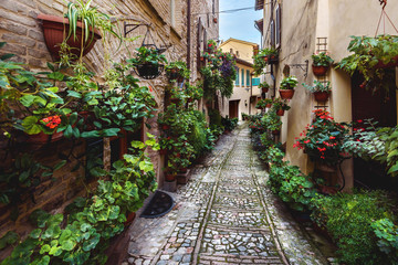 Surprising appearance of streets full of flowers in Spello, Umbr