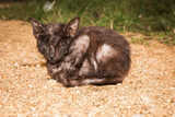 Stray kitten cat