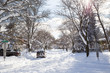 snow filled tree lined street