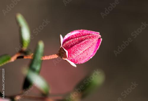 Australian Flowers Poster