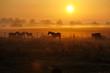 Sonnenaufgang auf einer Pferdeweide - 126937818