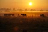 Sonnenaufgang auf einer Pferdeweide