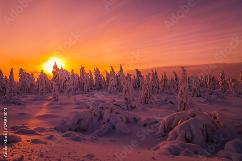 Foto op Canvas Crimson Winter snowscape. Landscape with forest, winter sun and cliffs