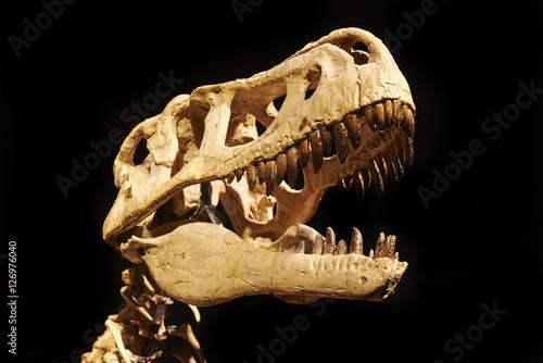 Plagát Excavating dinosaur fossils