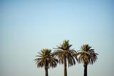 tree palm trees - 126978273