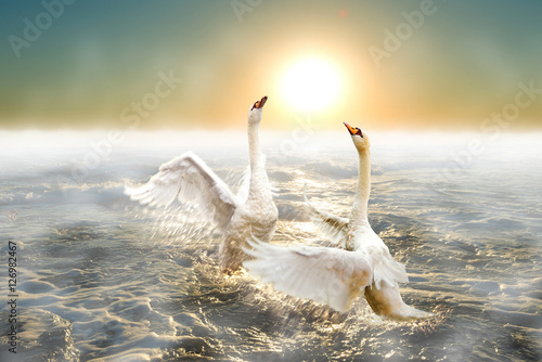 A pair of graceful swans splash in the waves of the sea.