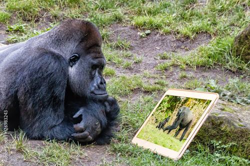 Poster Gorillafamilie