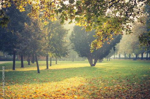Early autumn landscape in misty park, Krakow, Poland,