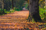 Path through woodland in autumn