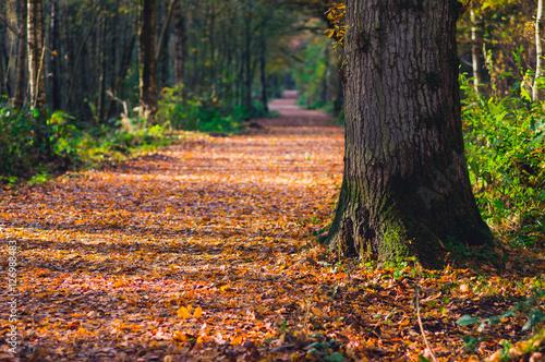 Poster Path through woodland in autumn