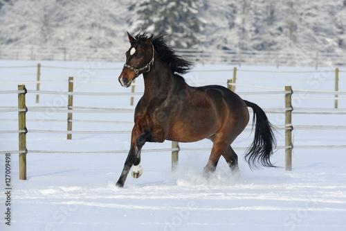 Poszter Galoppierendes Pferd