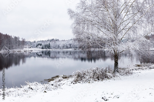 Poster White winter landscape lake in the forest