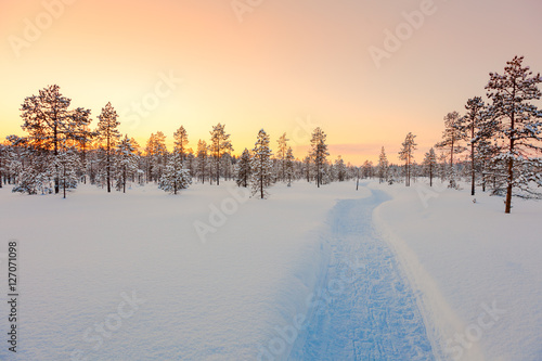 Sundown in winter snowy forest, beautiful landscape Poster