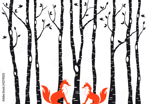 Fototapeta Cute foxes with birch trees, vector